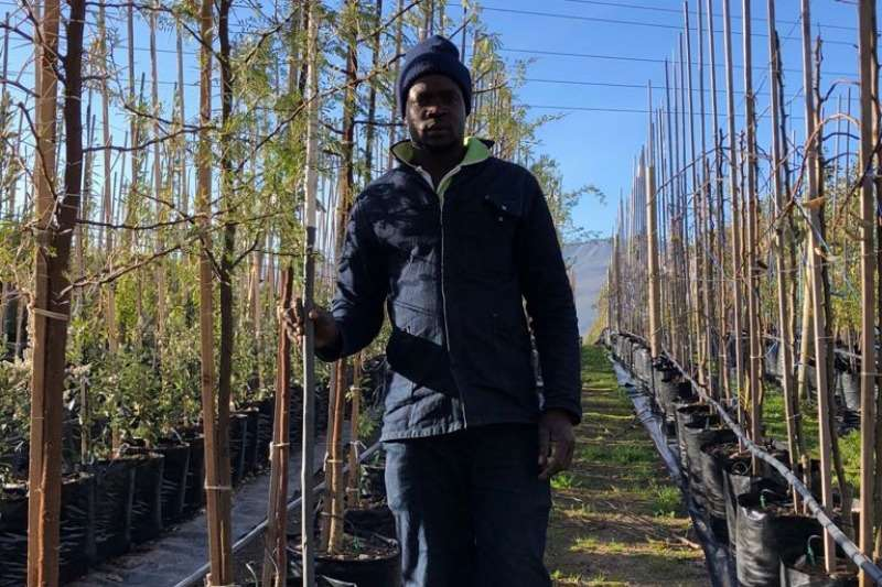 Themba Trees 50L Vachellia karroo   2.4 meters Other