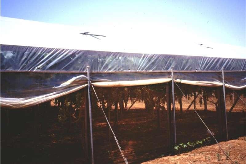 Integral planters Plastic mulch Planting and seeding