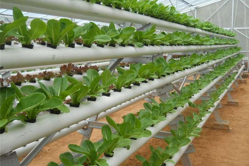 Planting and Seeding Other Planting and Seeding Big Harvest smart farms, Aquaponics / Hydroponics