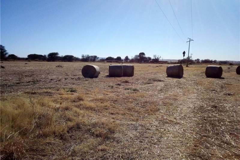 Other planting and seeding Grass/lusern mix bales Planting and seeding