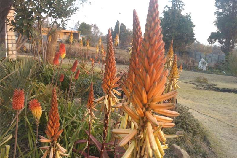 Other planting and seeding Indigenous plants for sale Planting and seeding