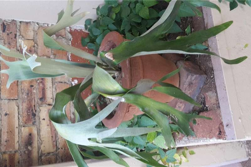 Other planting and seeding staghorn ferns Planting and seeding