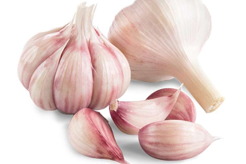 Seeds Garlic seed Seeds fertilisers and chemicals