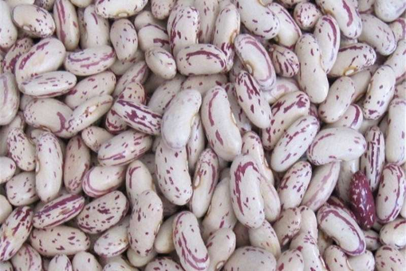 Seeds Grade A speckled sugar beans for sale Seeds fertilisers and chemicals