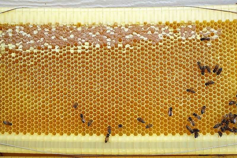honey from your own Bee hive Services