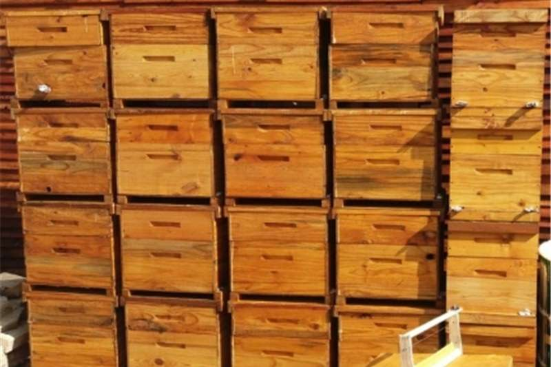 New bee hives Services
