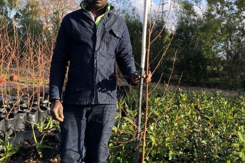 Themba Trees  Other 10L Betula pendula - 1.6 meters