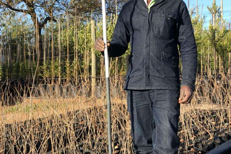 Themba Trees  Other 4kg Populus simonii - 0.8 meters